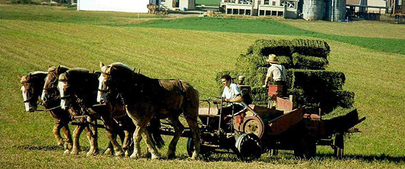 Forgiveness and the Amish
